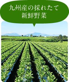 九州産の採れたて新鮮野菜