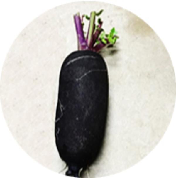 黒大根のサムネイル
