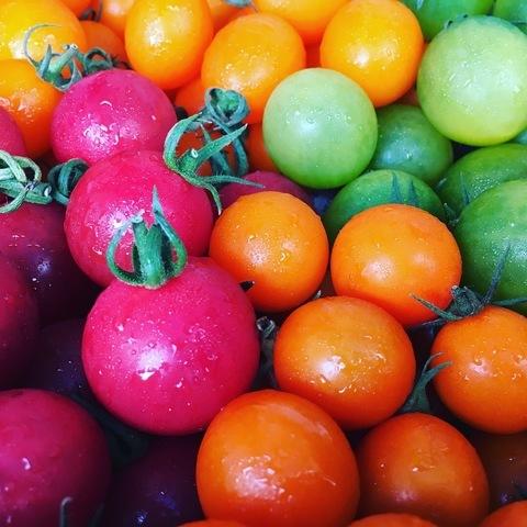 糸島ミニトマト